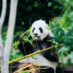 Chengdu_editor